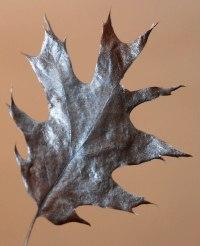 podzimní list z javoru